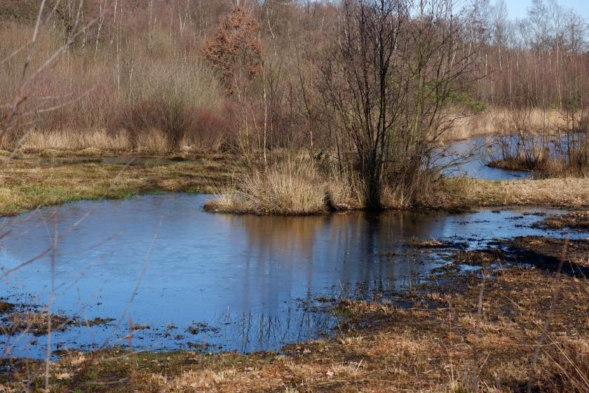Benelux België Kempen meer natuur wandeling wandelen wandelroute