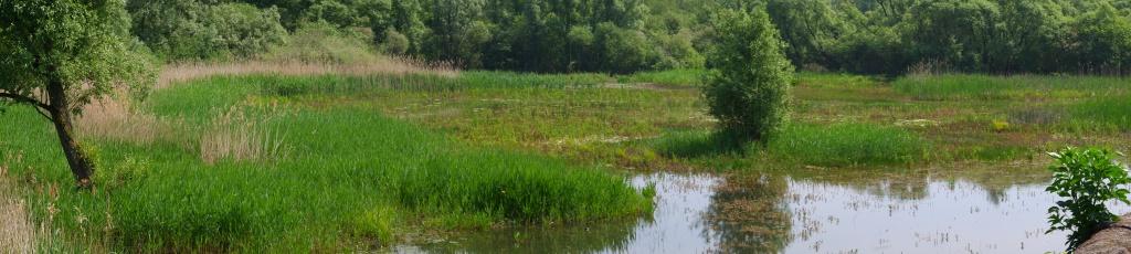 Wandeling wandelen wandelroute hobokense polders hoboken
