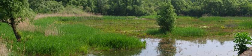 Wandeling van het jaar  wandelen natuurwandeling hobokense polder hoboken Antwerpen België Benelux