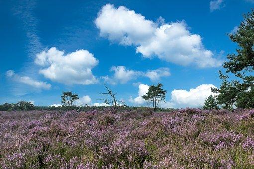 Benelux Heide landschap Nationaal park