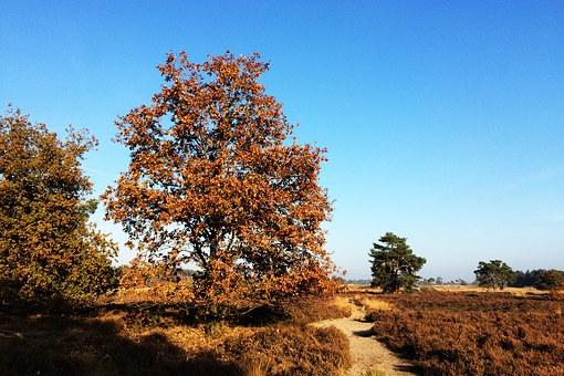 Benelux Nationaal Park