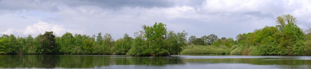 Panoramafoto Vijver Bos