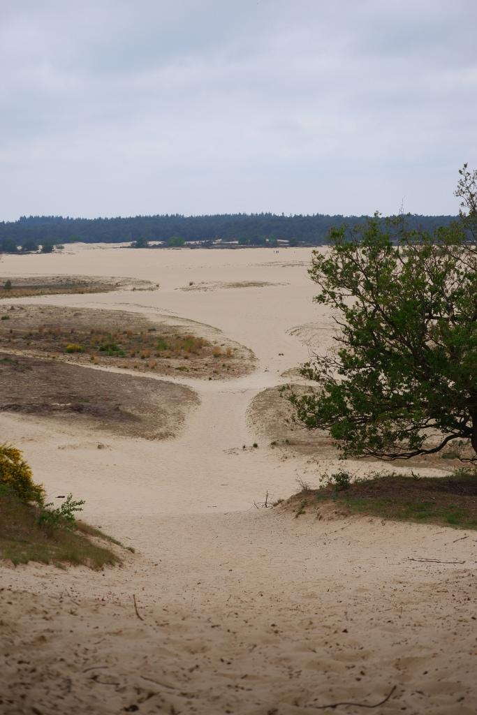 Wandelen Nederland nationaal park duinen Noord-Brabant