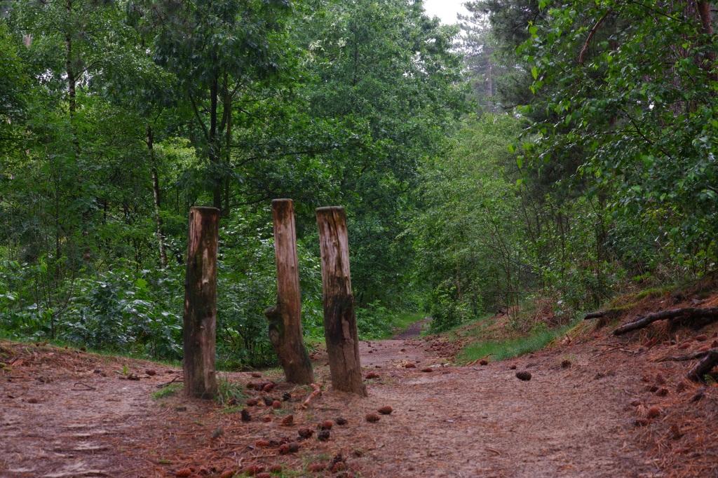 wandelpad bospad wandelroute wandeling natuurwandeling zwartgoorheide vosselaar kempen België