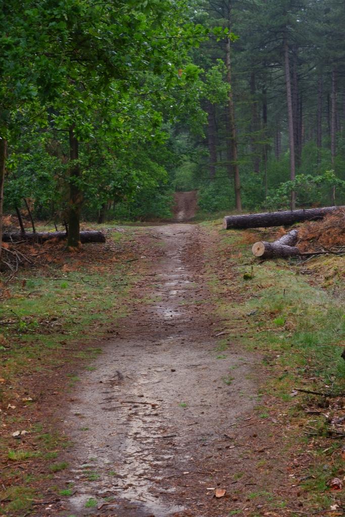 wandelpad wandelroute heuvelachig bos Zwartgoorheide Vosselaar Kempen België