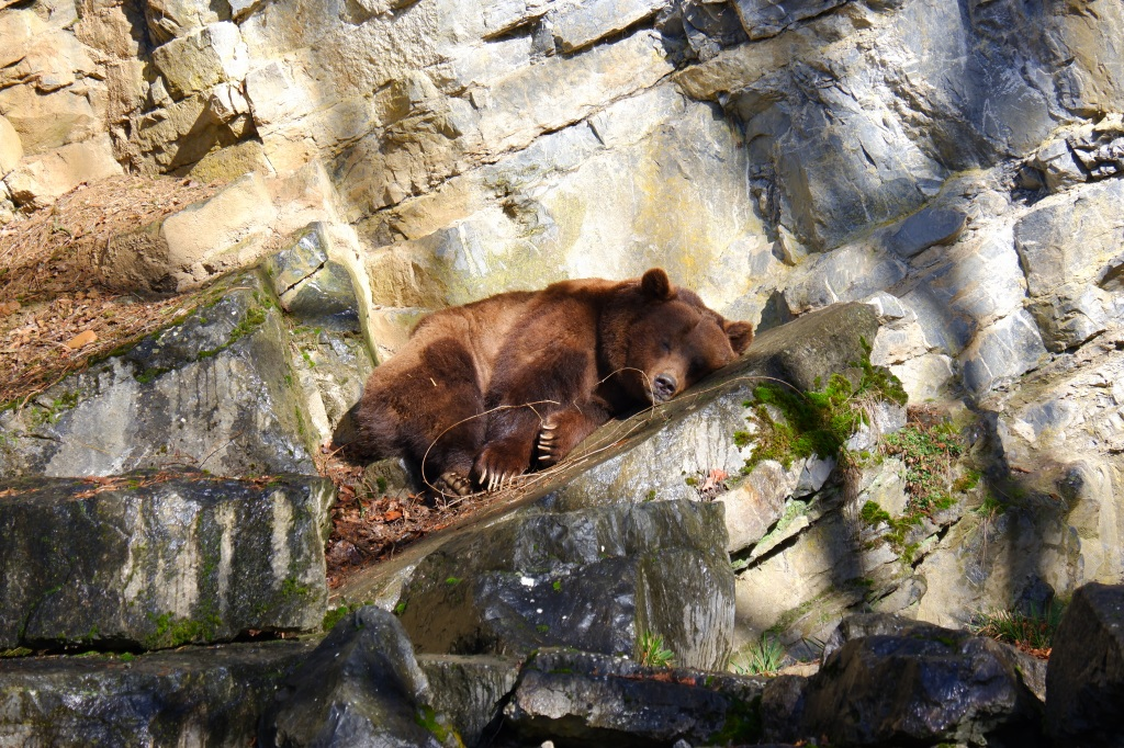 big five Europa wandelen Benelux wandeling bruine beer dieren wildpark
