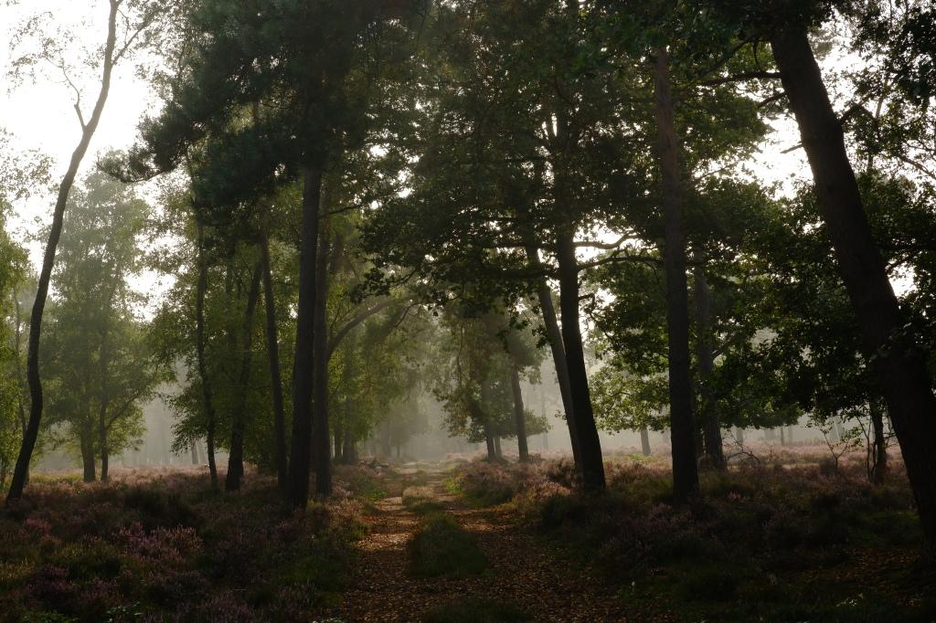 Vennengebied Turnhout wandelroute natuurreservaat natuurgebied  Hoogmoerheide heide wandeling Kempen