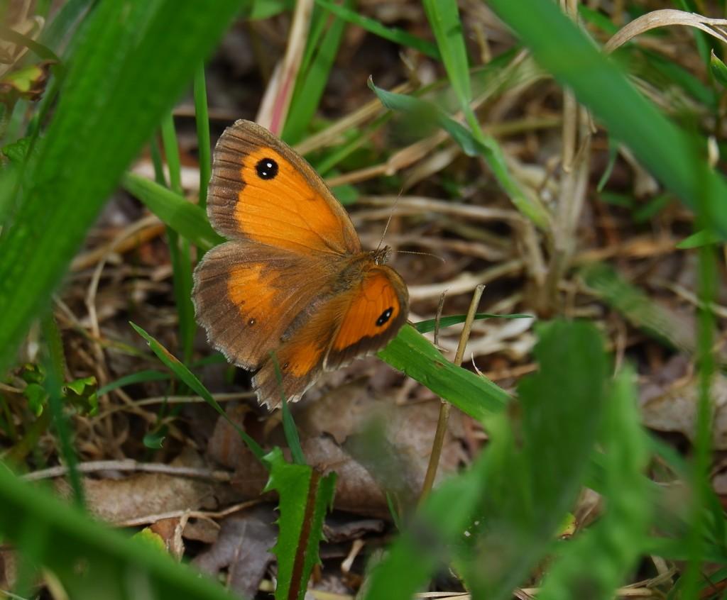 wandelroute wandelknooppunt knooppunt ravelse gewestbossen natuurgebied vlinder