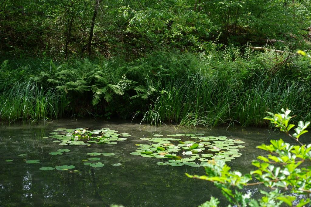 wandelroute wandelknooppunt knooppunt ravelse gewestbossen natuurgebied vijver waterlelies