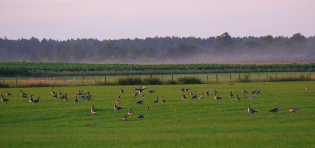 Vennengebied Turnhout wandelroute natuurreservaat natuurgebied ganzen