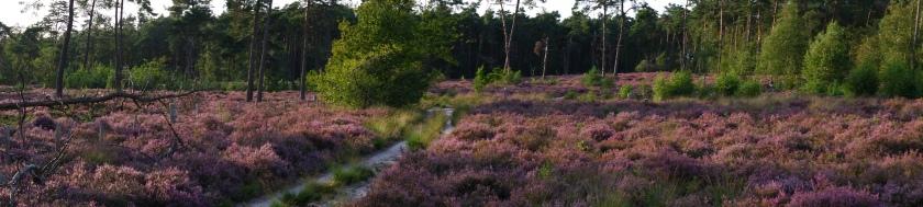 wandelen wandelroute natuurgebied wandelknooppunt