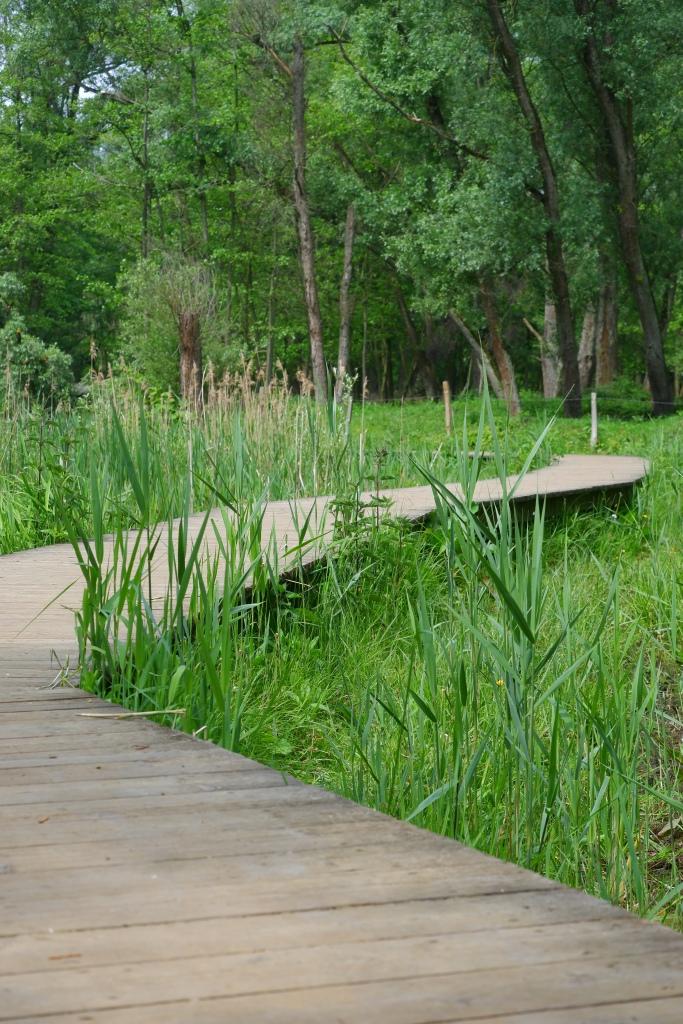 wandelen fietsen hobokense Polder natuurgebied natuurdomein wandelroute