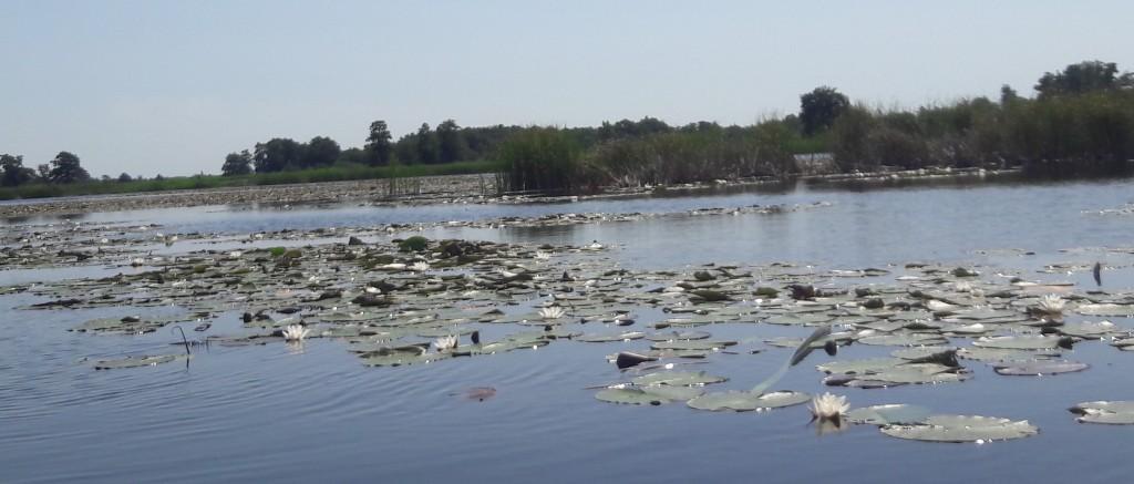 kano varen weerribben wieden nationaal park belt-schutsloot kanoën kano boot varen vijver meer