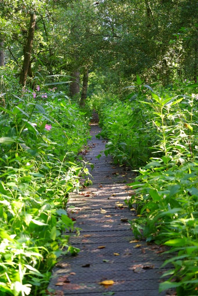 wandelen natuurwandeling wandelroute kolonie Wortel wandelknooppunt fietsknooppunt wandelpad