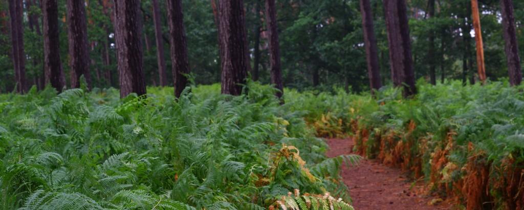 wandelen fietsen natuurpad lovenhoek  natuurgebied natuurdomein wandelroute