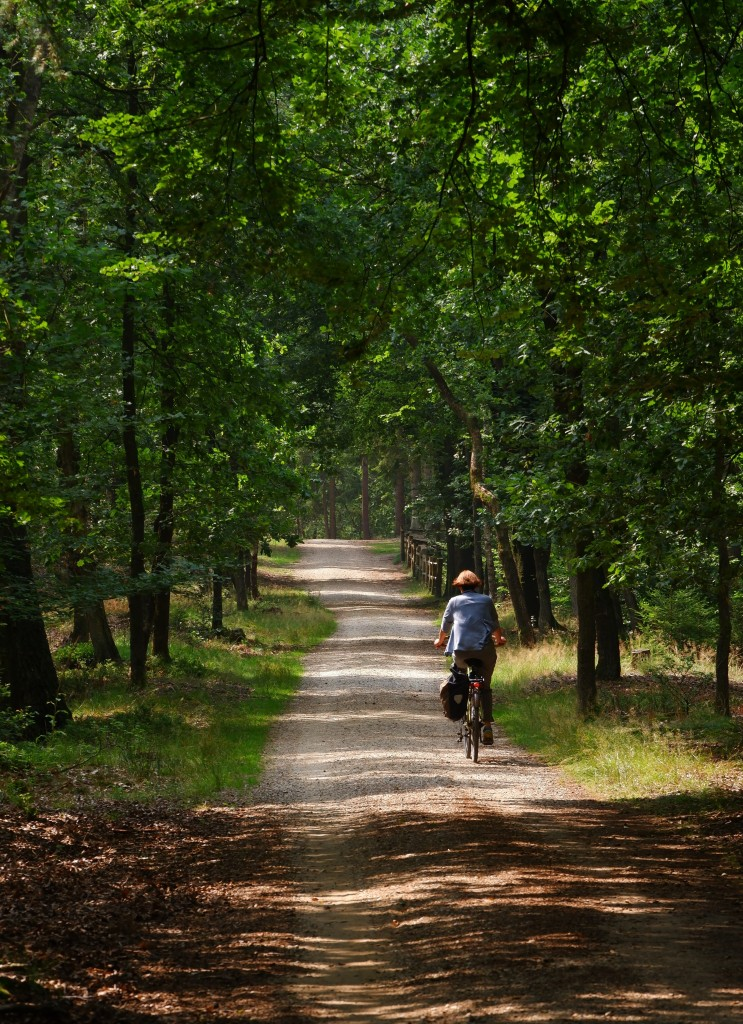 natuurgebied natuurreservaat Kempen wandelen fietsen mountainbiken paardrijden mennen joggen watersporten Benelux