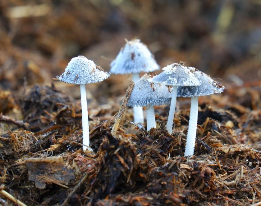 paddenstoelen wandelen natuurwandeling herfst