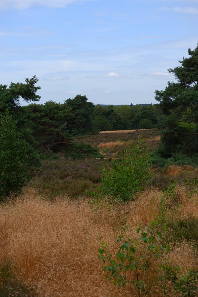 Sallandse heuvelrug nationaal park Overijsel Holten Nederland Benelux