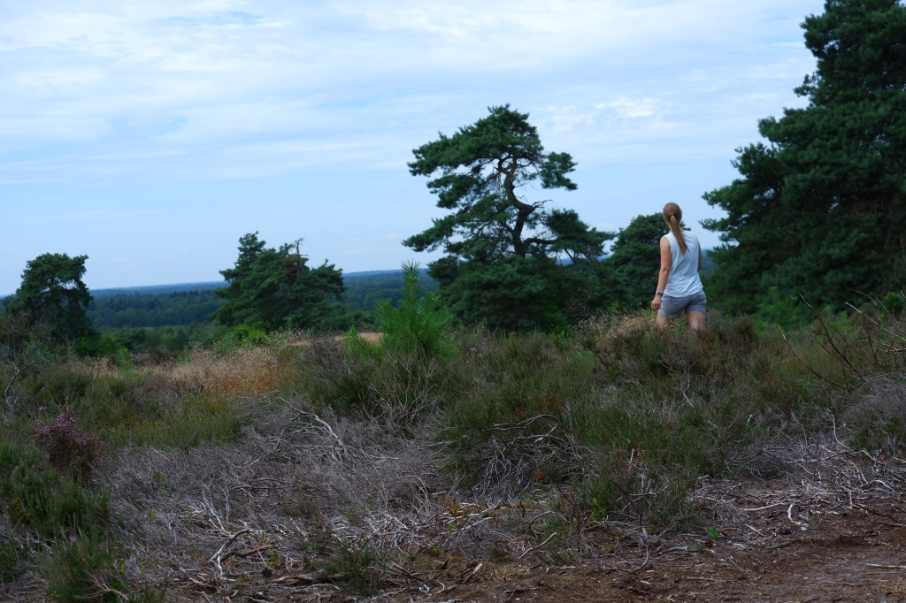 wandelen groene wandeling Sallandse heuvelrug groene wandeling
