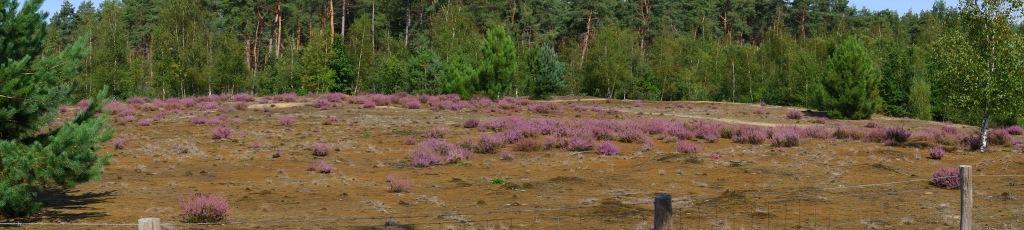 Zwart water Kasterlee wandelen natuurgebied wandeling Kempen Vlaanderen België
