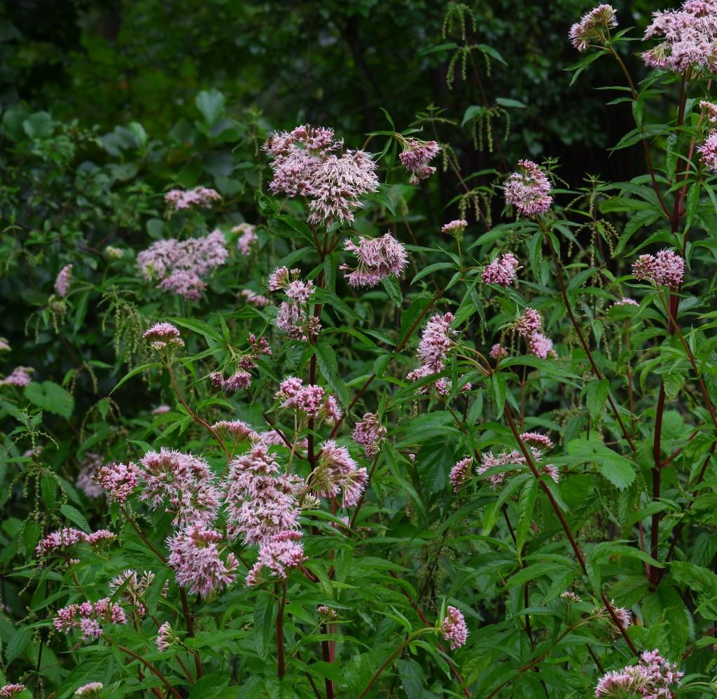 wandeling Natuurpad Lovenhoek Lovenbos Vorselaar wandelroute bloemen