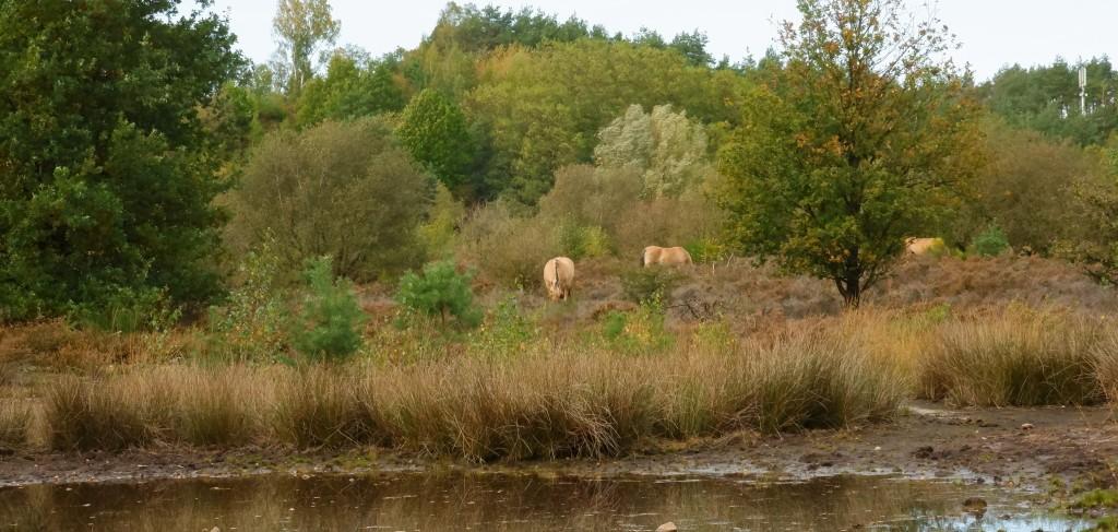 wandelen Limburg België landschap Maasmechelen vallei kikbeekbron prachtige natuur