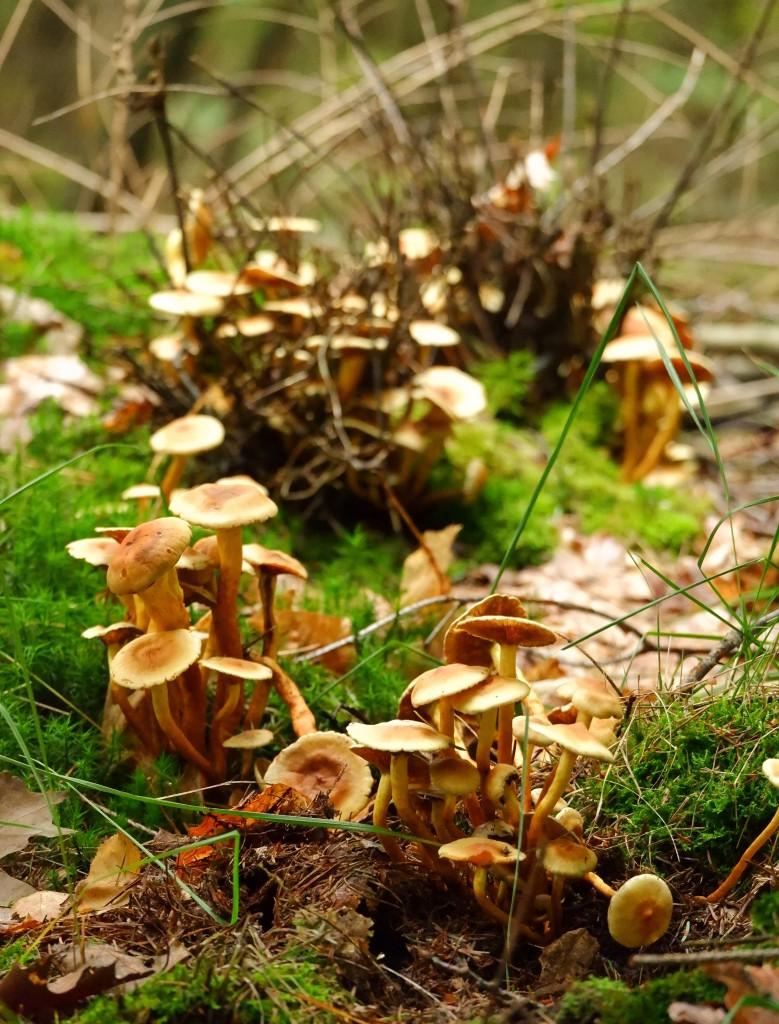 natuurgebied Chaamse Bossen wandelpad wandelroute natuurdomein Noord-Brabant boswandeling Nederland Benelux paddenstoelen