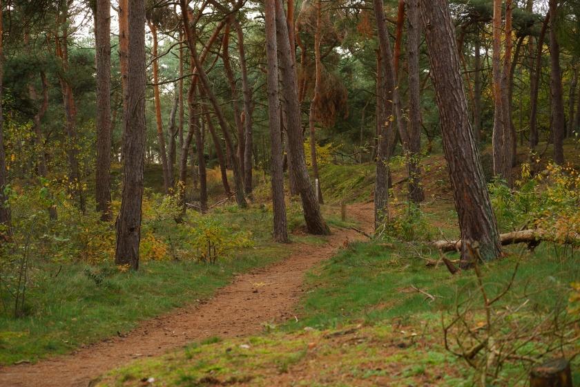 Lommelse Sahara Limburg vijvers natuurgebied wandelen wandelroute