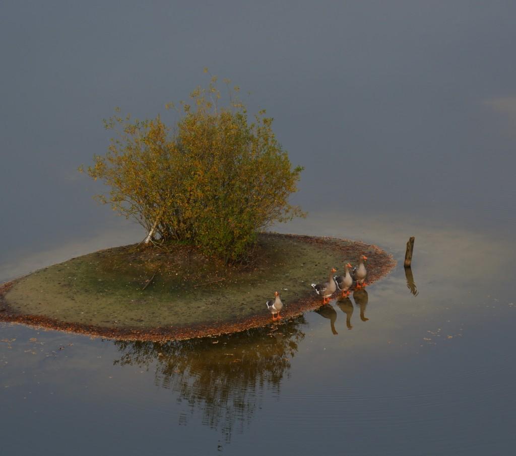 Lommelse Sahara Limburg vijvers natuurgebied eenden wandelen