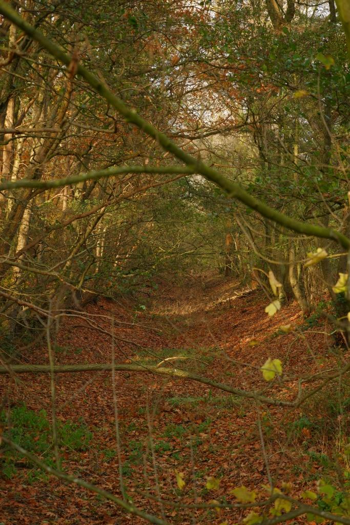 kolonie Merksplas wandelen natuurgebied natuurwandeling wandelroute slotgracht ringgracht