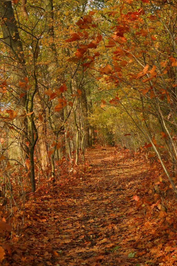 kolonie Merksplas wandelen natuurgebied natuurwandeling wandelroute wandelpad