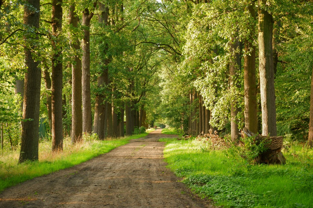 kolonie Merksplas wandelen natuurgebied natuurwandeling wandelroute