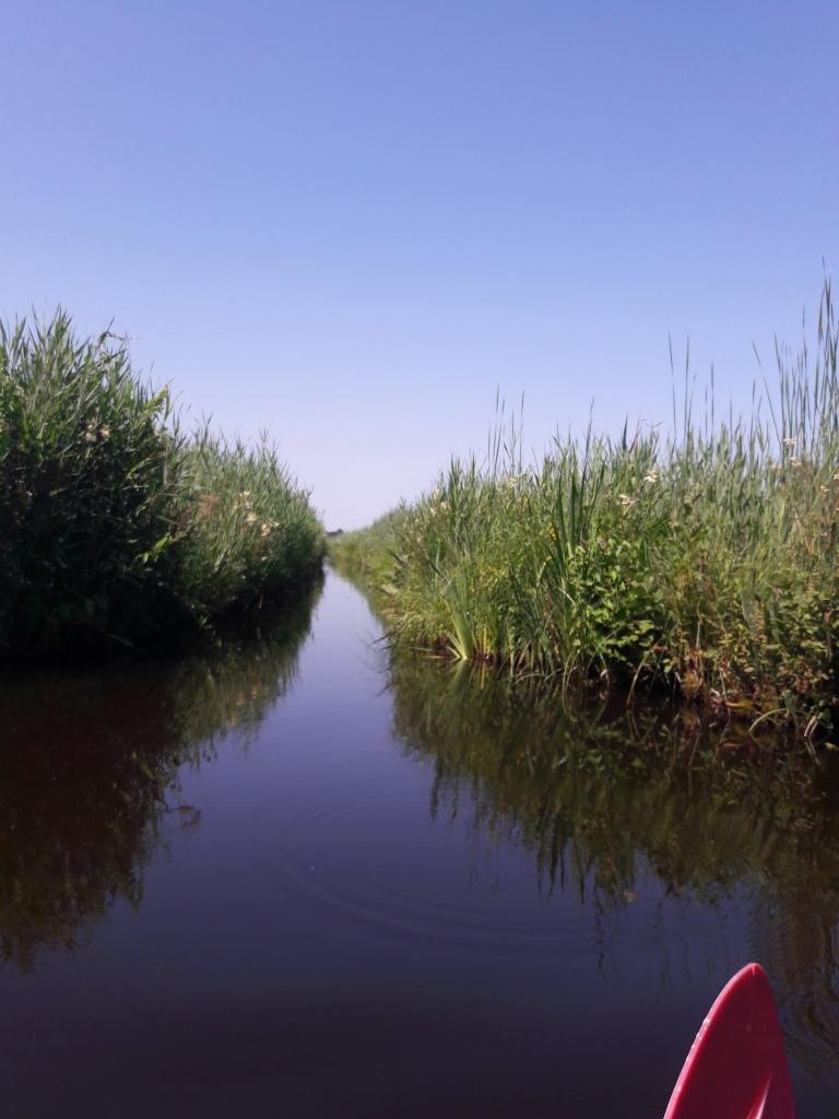 mooiste wandelingen studiobenelux wandelen natuurwandeling prachtige natuur kajakken weerribben-wieden provincie Overijsel Nederland Holland Benelux