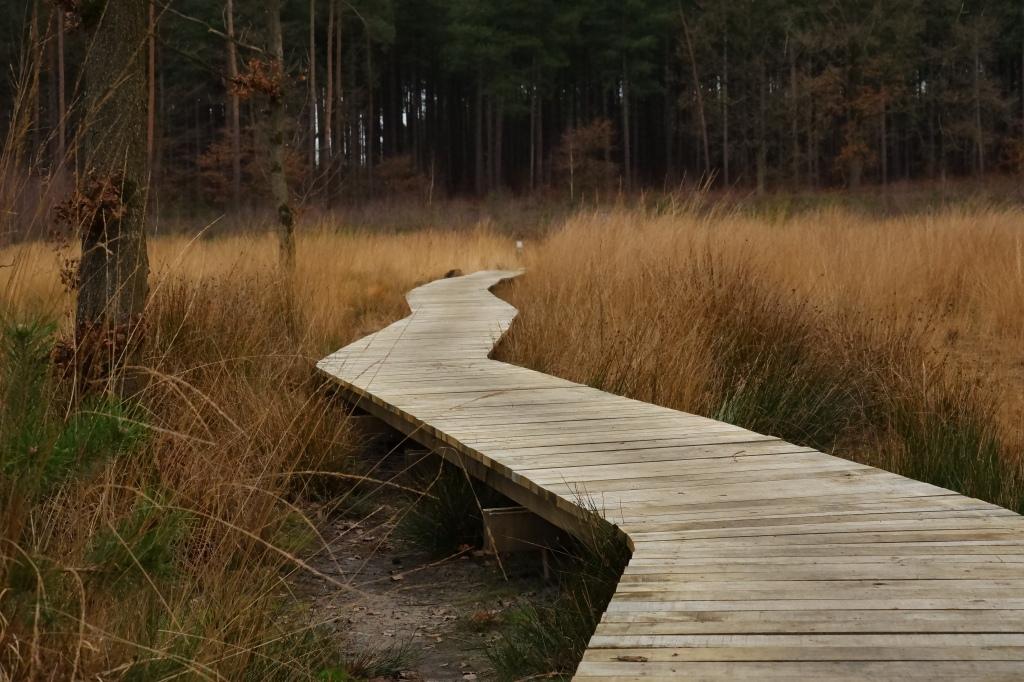 wandelen natuurwandeling wandelknooppunten abdij van Averbode Averbodebos houten wandelpad