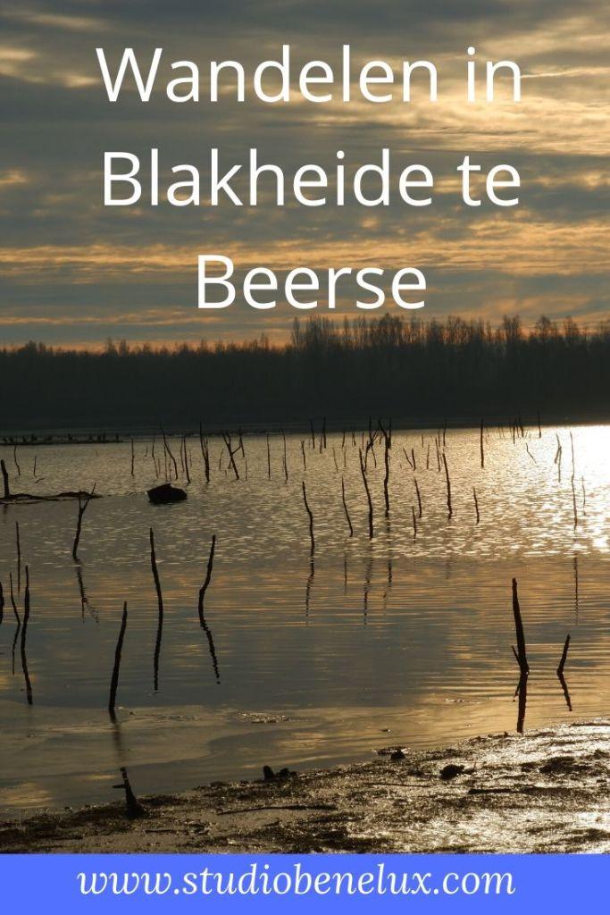 wandelen wandeling natuurwandeling Beerse kempen België Benelux Blakheide