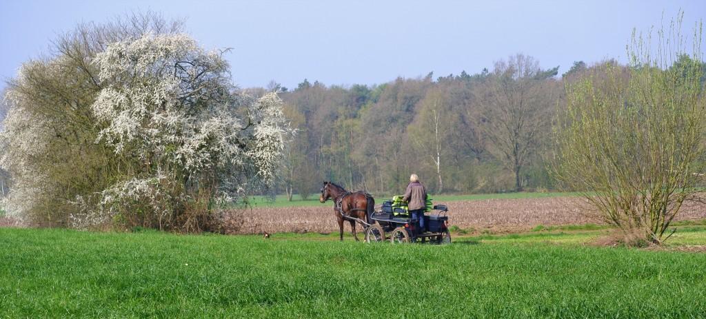 reizen België Benlux koetsentocht paardrijden
