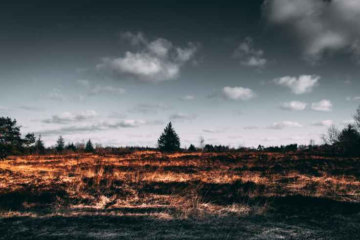 bosbrand natuurbrand wandeling natuurgebied
