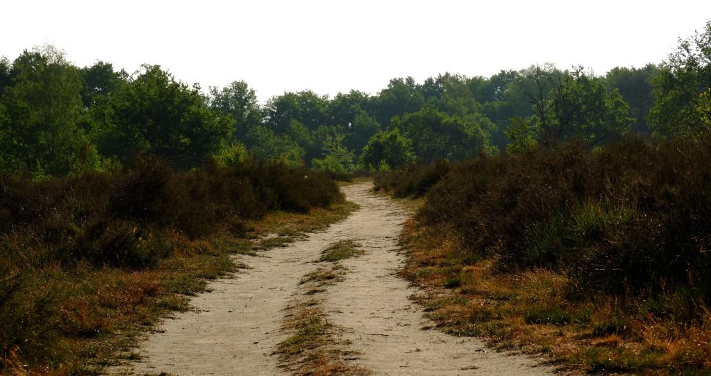 wandelen wandeling natuurwandeling Kesselse Heide  hike hiking backpacken