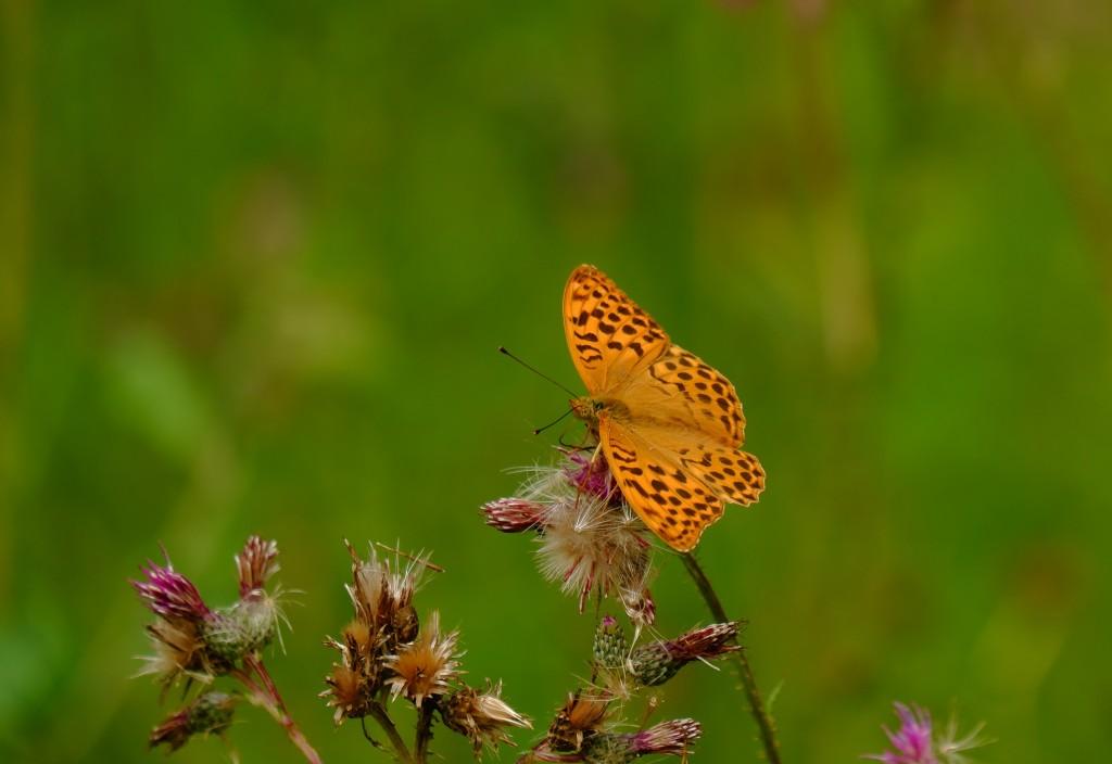 Hageland heuvelroutes wandeling wandelroute Vlooybergtoren Vlaams-Brabant Vlaanderen België Benelux vlinder