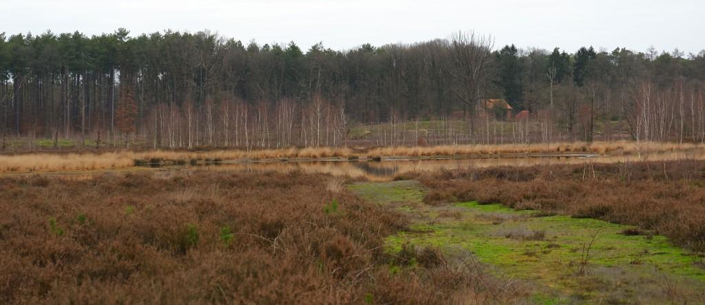 heidegebied wandeling wandelen fietsen Nederland België mooiste heide moorland heather abdij averbode vlaams-brabant