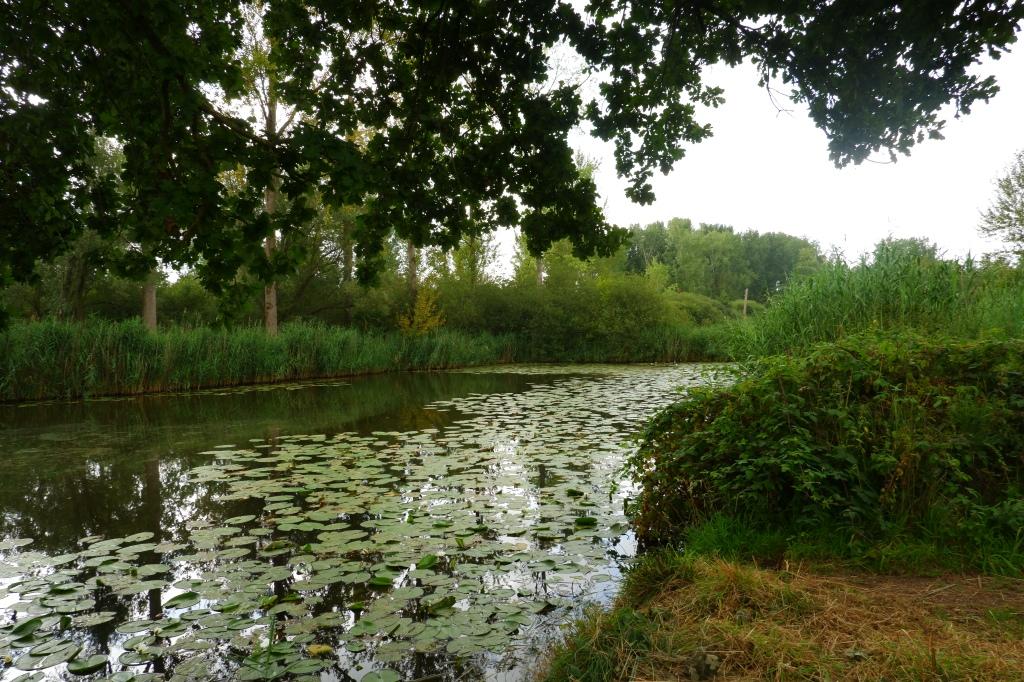 Donkmeer wandelen wandelroute recreatiedomein Oost-Vlaanderen Berlare België Nieuwdonk turfputwandeling