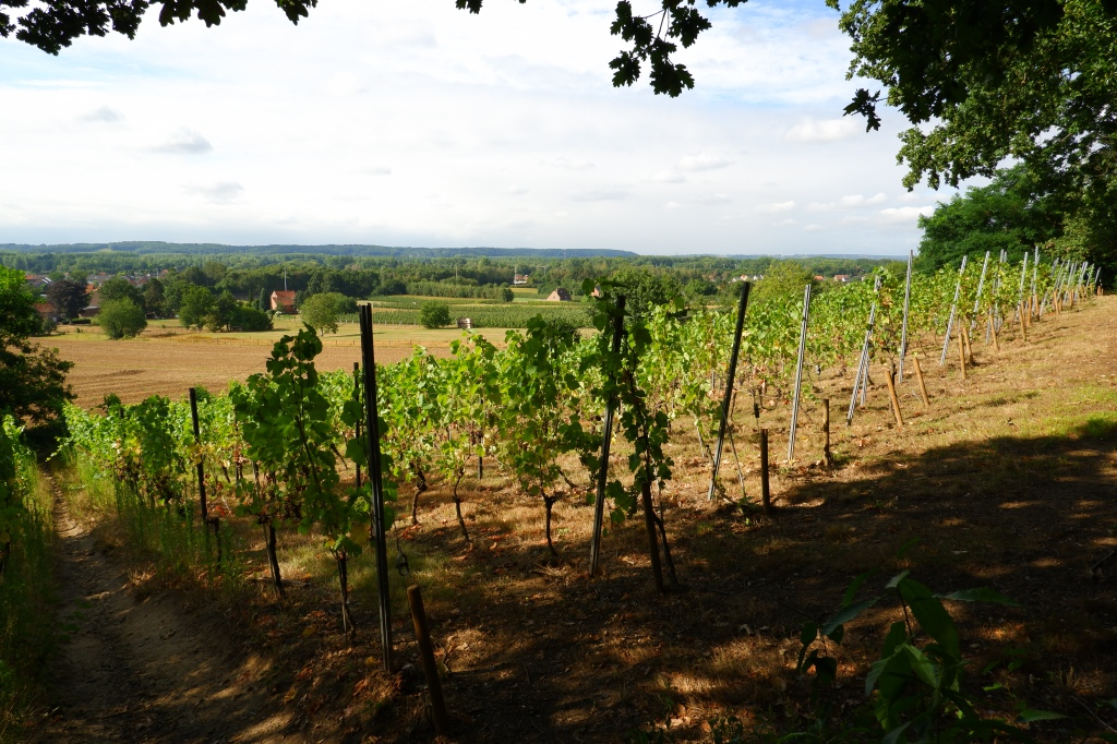 Wijngaardberg Hageland wandelen wijnranken wijngaard Vlaams-Brabant Rotselaar Wezemaal wandelroute België