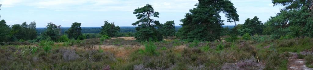 heidegebied wandeling wandelen fietsen Nederland België mooiste heide moorland heather sallandse heuvelrug overijssel nationaal park
