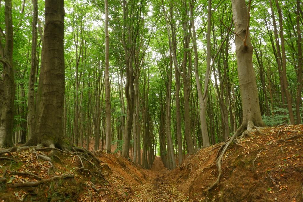 Wijngaardberg Hageland wandelen bos Vlaams-Brabant Rotselaar Wezemaal wandelroute België