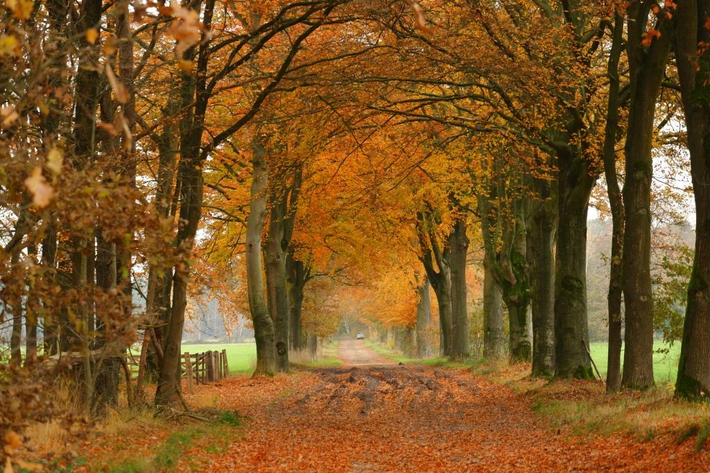 herfst wandeling wandeltips inspiratie wandelen relax ontspanning