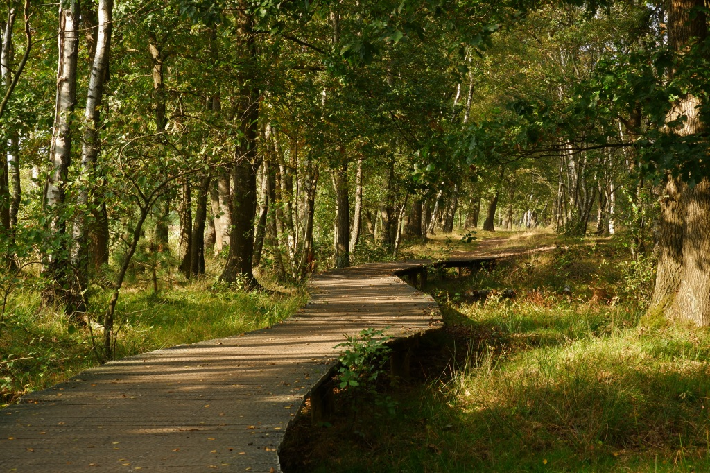 Plateaux Hageven tweelandenpad wandelen wandelingen België Nederland wandelroute Benelux Limburg Noord-Brabant
