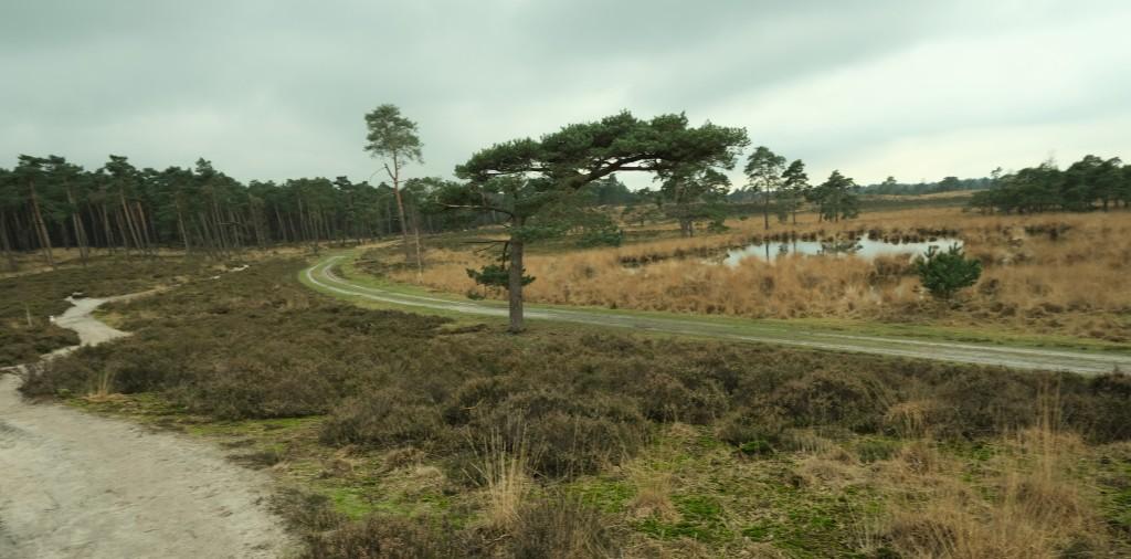 Kalmthoutse Heide nationaal park wandelen wandelroute schaap Putse Moer Antwerpen België Benelux