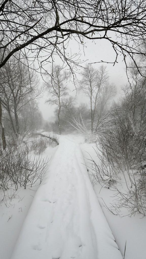 wandelroute vlonderpad Hoge Venen sneeuw Baraque Michel hohes fenn Hautes Fagnes