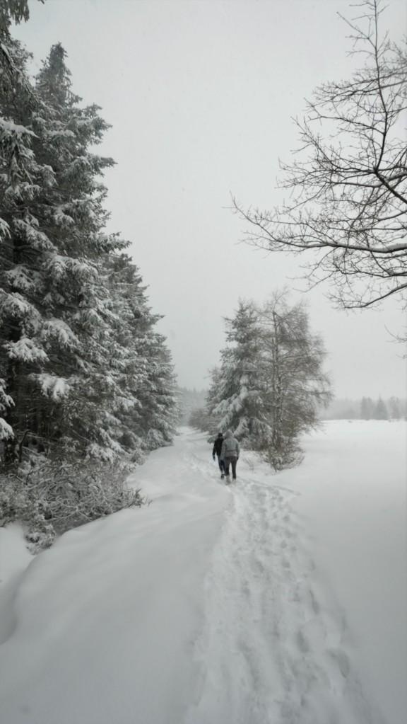 wandelroute Hoge Venen sneeuw Baraque Michel hohes fenn Hautes Fagnes  hike