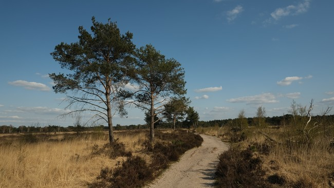 Kalmthoutse heide wandelroute wandeling nationaal park grenspark Vlaanderen Antwerpen België Nederland